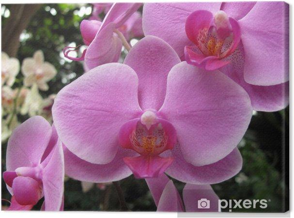 Tableau sur toile Jardin: orchidée exotique grandi dans un environnement à  effet de serre