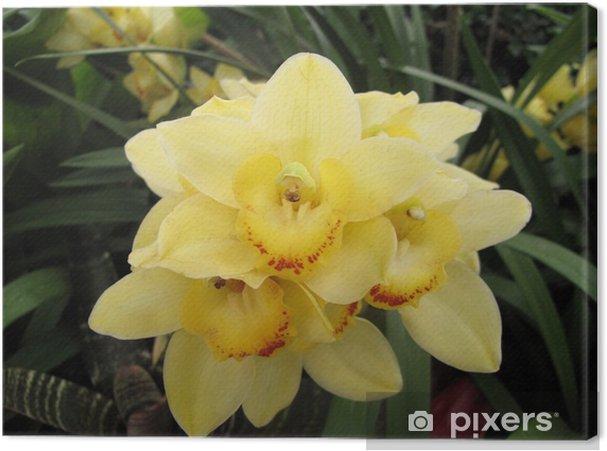 Tableau sur toile Jardin: orchidée jaune exotique grandi dans un  environnement à effet de serre