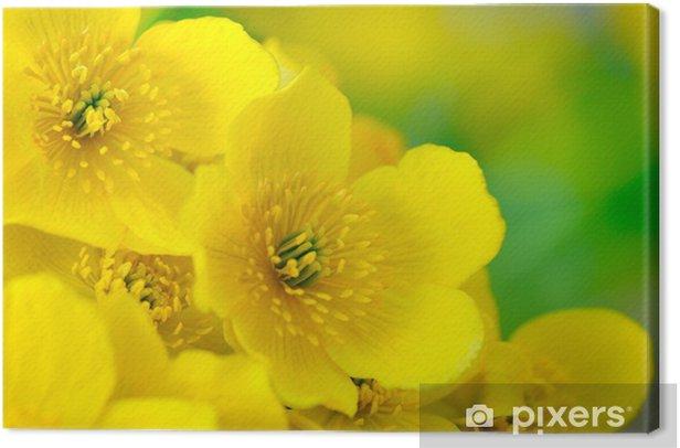 Tableau sur toile Jaune Kingcup (des marais) Fleurs Macro - Fleurs