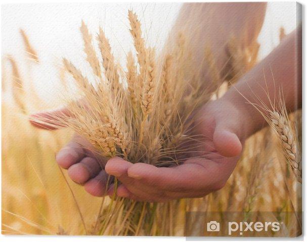 Tableau sur toile Jeune agriculteur dans un champ de blé - Parties du corps
