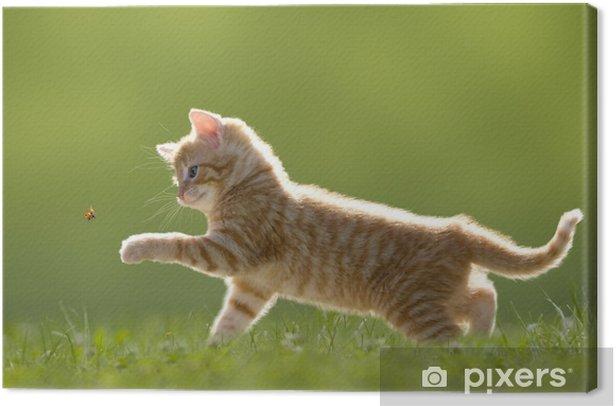 Tableau sur toile Jeune chat avec coccinelle sur un champ vert - Thèmes
