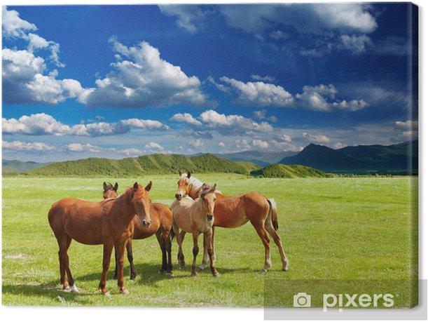 Tableau sur toile Jeunes chevaux - Campagne
