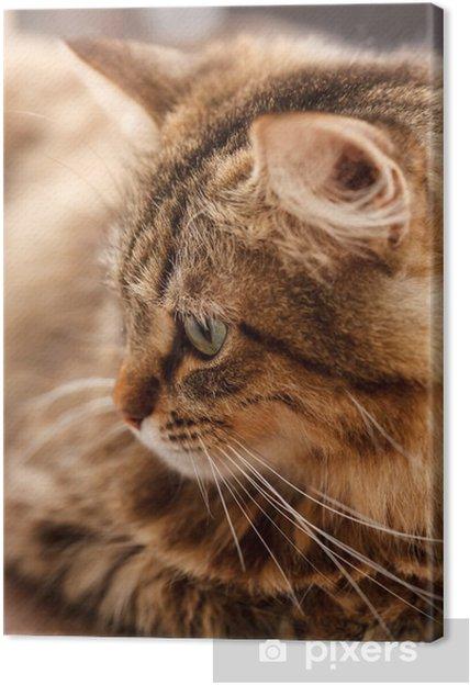 Tableau sur toile Joli chat - Mammifères