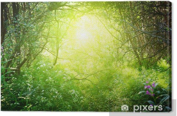 Tableau sur toile Journée ensoleillée dans la forêt profonde - Thèmes