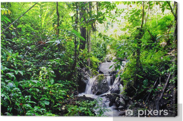 Tableau sur toile Jungle à Tentena - Thèmes