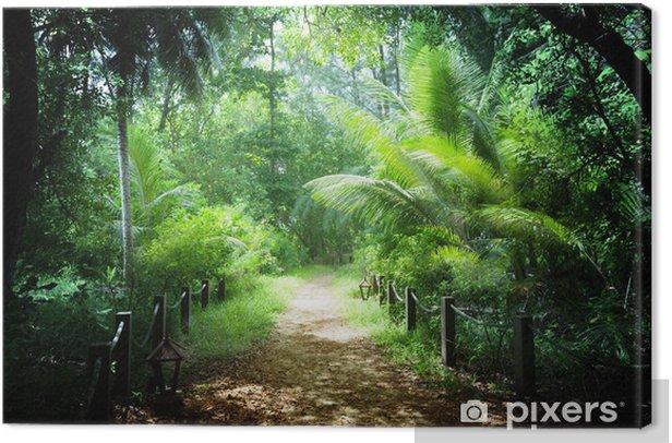 Tableau sur toile Jungle dans les Seychelles - Nature