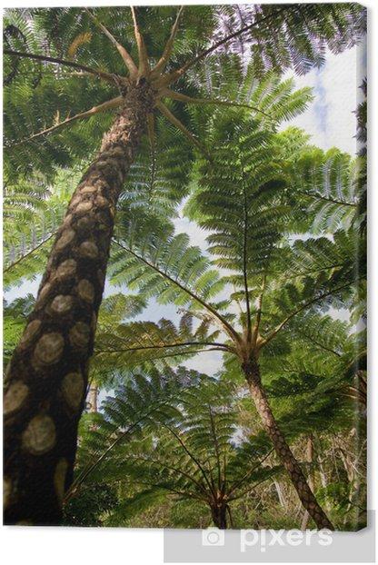 Tableau sur toile Jungle de cyathea lepifera, - Thèmes