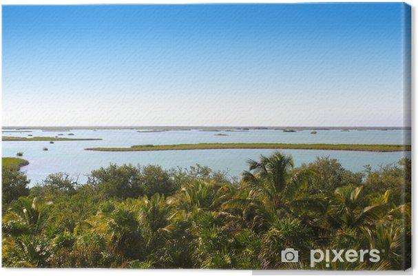 Tableau sur toile Jungle mangrove lagon palmier jungle - Amérique
