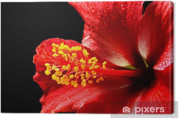 Tableau sur toile Kamla l'hibiscus de l'amour - Fleurs