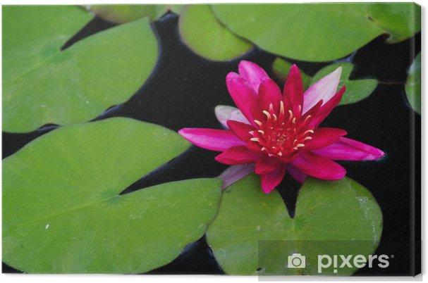 Tableau sur toile L'eau rouge lilly - Villes américaines