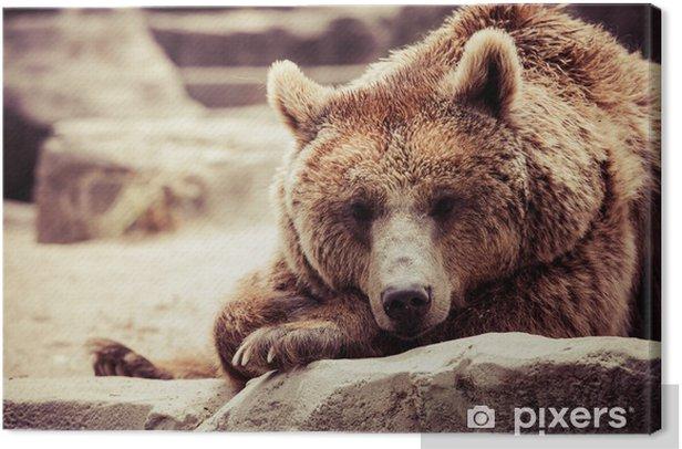 Tableau sur toile L'ours brun dans une drôle de pose - Thèmes