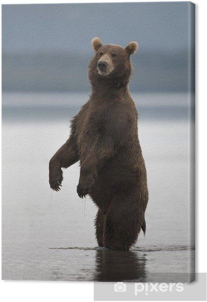Tableau sur toile L'ours brun se leva sur ses pattes arrière - Mammifères