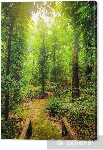 Tableau sur toile La beauté des forêts tropicales. diversité botanique tropicale et haute humidité. - Paysages
