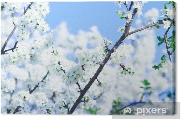 Tableau sur toile La floraison des arbres avec des fleurs blanches au printemps - Fleurs
