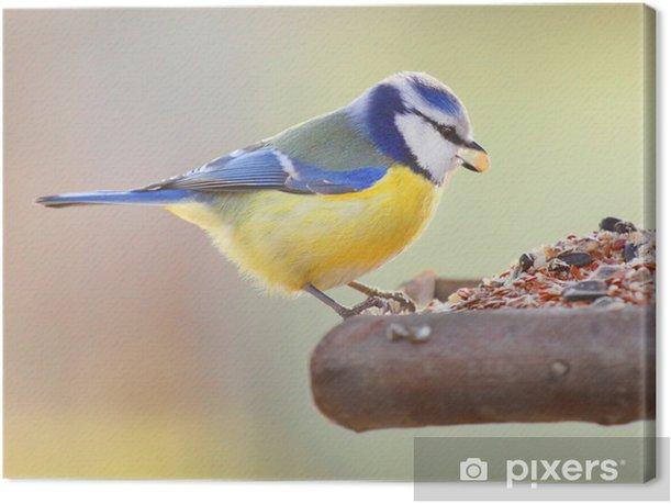 Tableau sur toile La Mésange bleue (Cyanistes caeruleus de) sur une table d'oiseaux. - Oiseaux