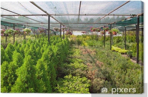 Tableau sur toile La pépinière de plantes - Plantes