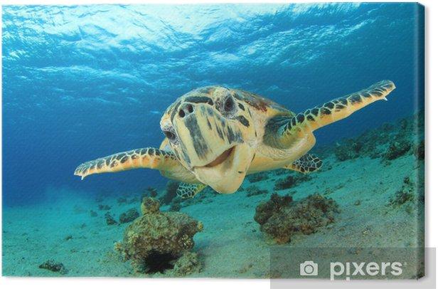 Tableau sur toile La tortue imbriquée mer - Autres Autres