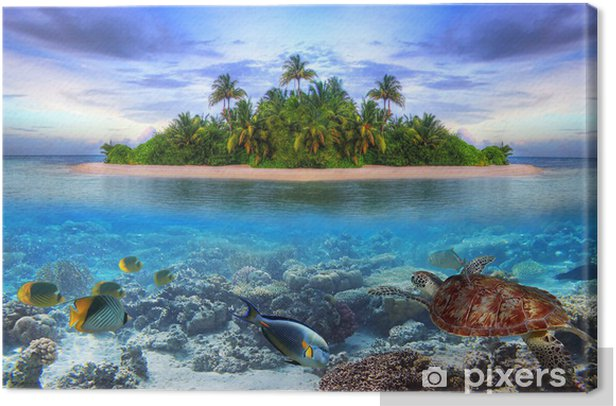 Tableau sur toile La vie marine à l'île tropicale des Maldives -