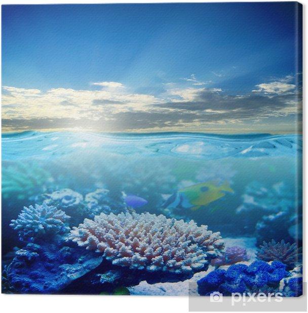 Tableau sur toile La vie marine - Thèmes