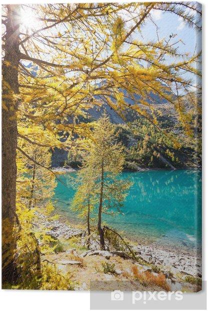 Tableau sur toile Lago alpino con larici in autunno - Saisons