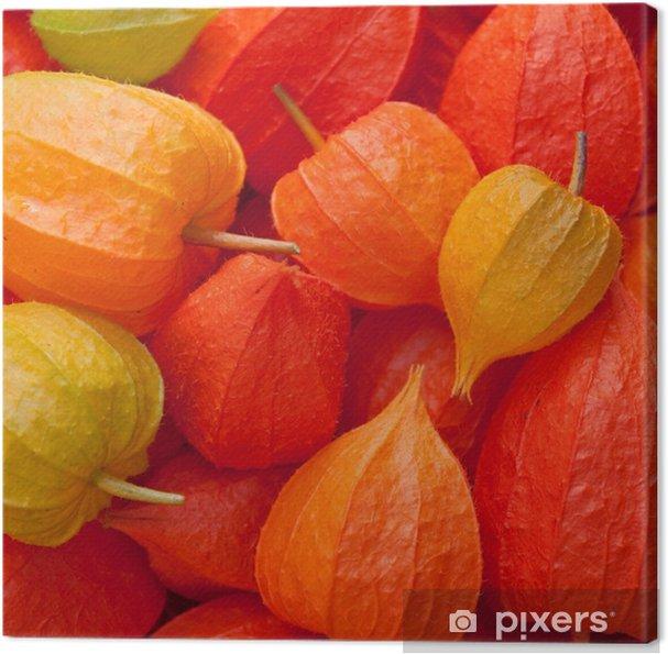 Tableau sur toile Lampionblume - Physalis Alkekengi - Saisons
