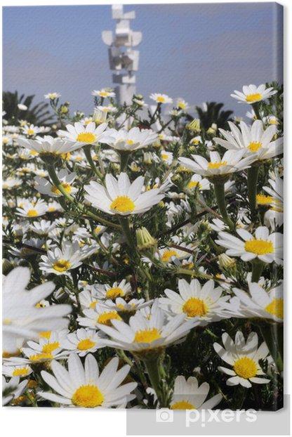 Tableau sur toile Lanzarote en fleur - Saisons
