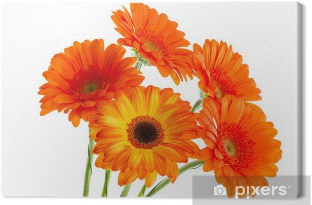 Tableau sur toile Le bouquet de gerbera opange - Fleurs