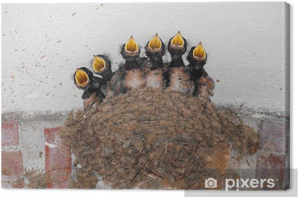 Tableau sur toile Le chœur des frères et sœurs - Oiseaux