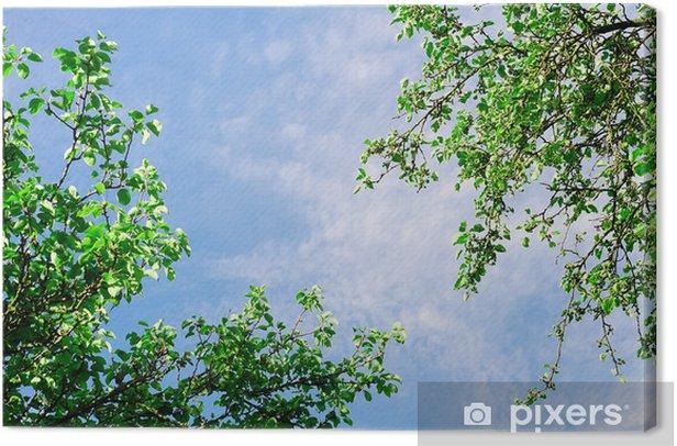 Tableau sur toile Le ciel avec un sommet de l'arbre - Ciel
