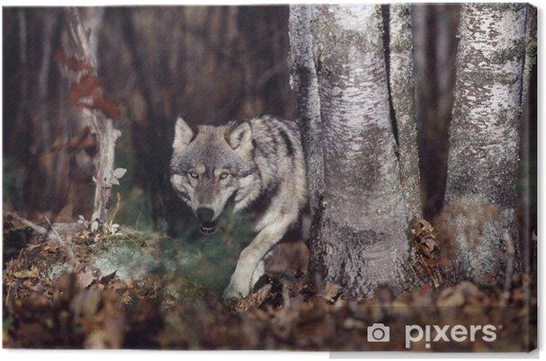 Tableau sur toile Le loup gris dans la forêt - Loups