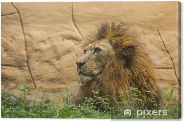 2aa83591642a5 Tableau sur toile Le roi lion • Pixers® - Nous vivons pour changer