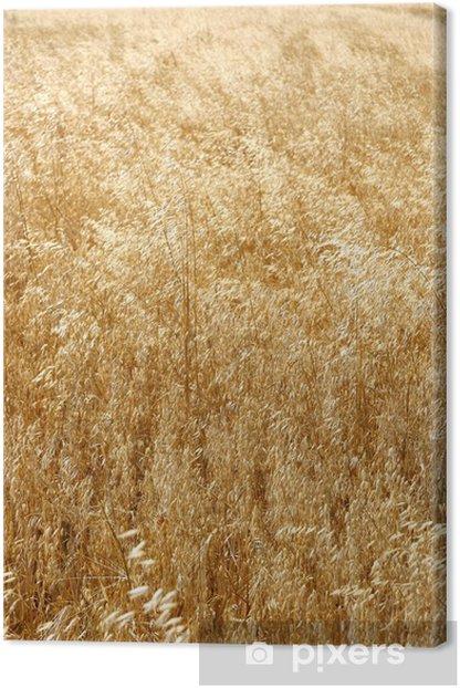 Tableau sur toile Les champs de céréales - Agriculture