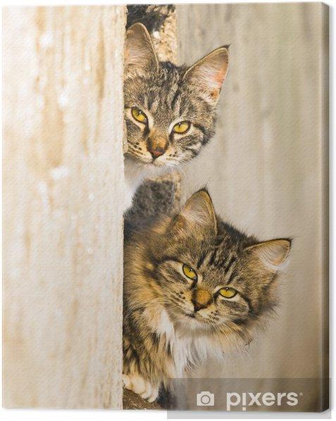 Tableau sur toile Les chats de printemps - Mammifères