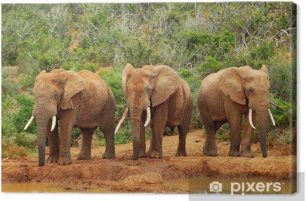 Tableau sur toile Les éléphants d'Afrique - Thèmes