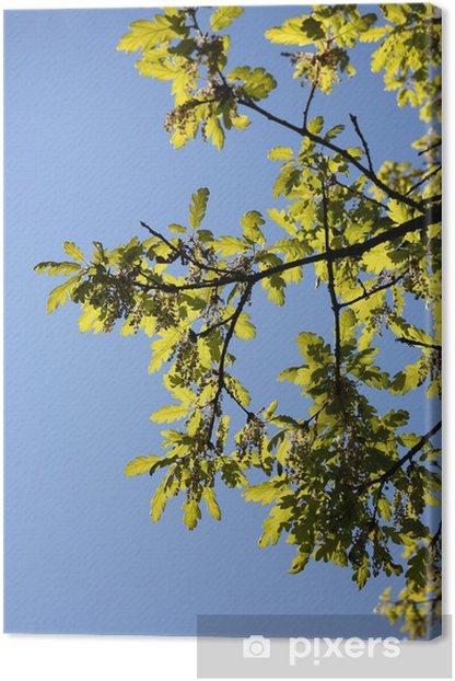 Tableau sur toile Les jeunes feuilles de chêne - Vie
