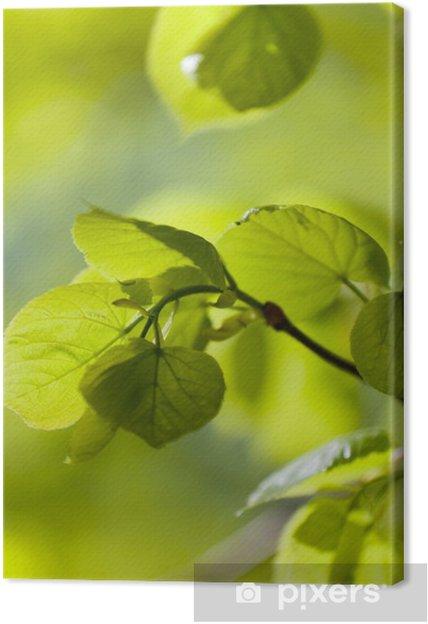 Tableau sur toile Les jeunes feuilles vert sur un plein soleil - Saisons