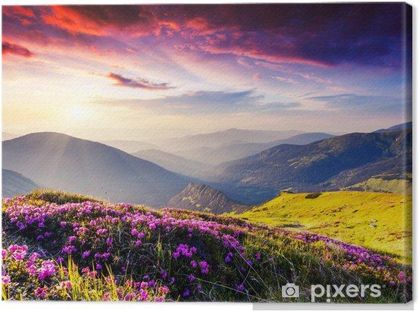 Tableau sur toile Les montagnes derrière une prairie rose - Thèmes