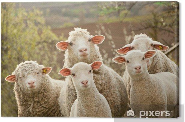 Tableau sur toile Les moutons au pâturage - iStaging