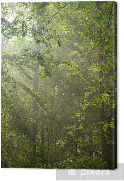 Tableau sur toile Les rayons du soleil briller à travers les branches et les feuilles vertes - Abstrait