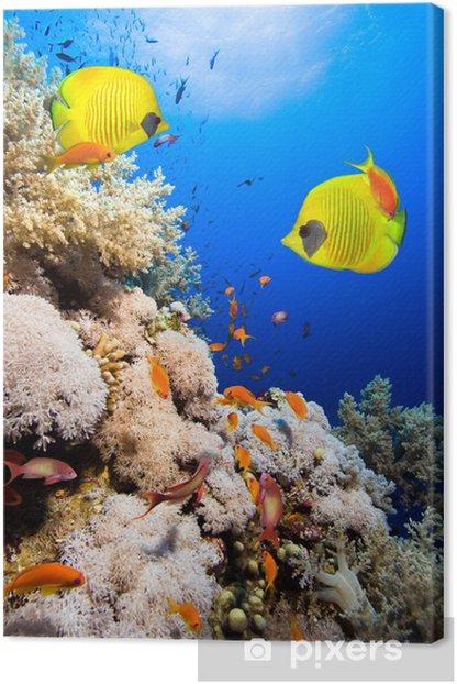 Tableau sur toile Les récifs coralliens et les poissons papillons masqués - Récif de corail