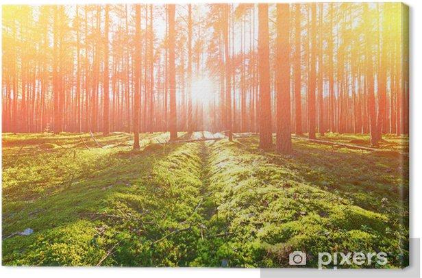 Tableau sur toile Lever de soleil dans une forêt de pins - Forêt