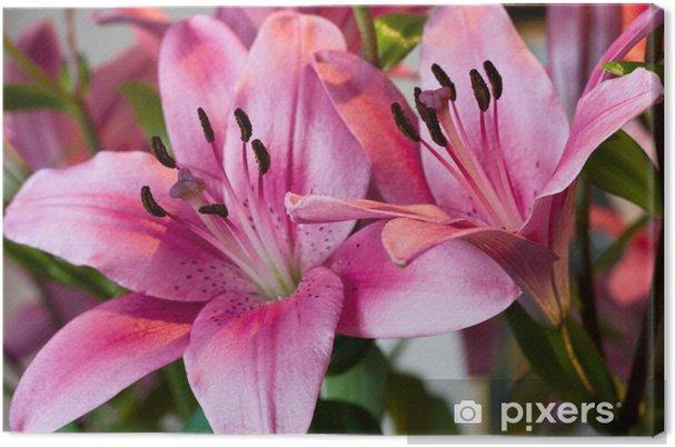 Tableau sur toile Lillies rose - Maisons et jardins