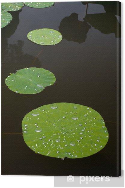 Tableau sur toile Lily pads - Plantes