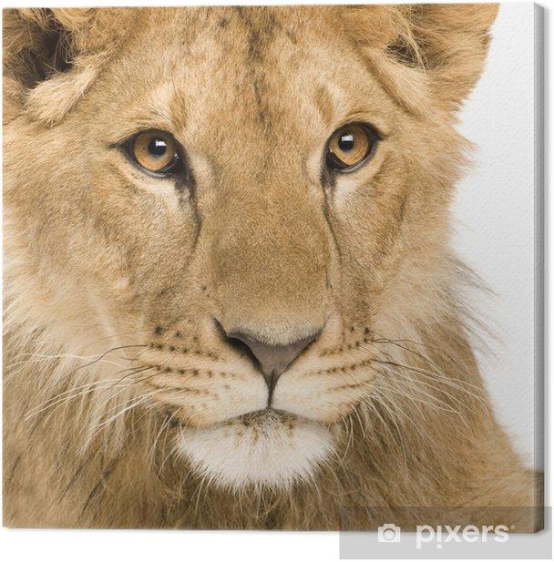 Tableau sur toile Lion Cub (9 mois) - Thèmes