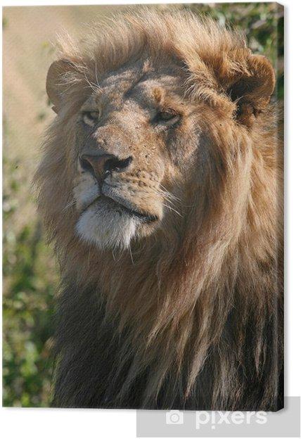 Tableau sur toile Lion - Thèmes