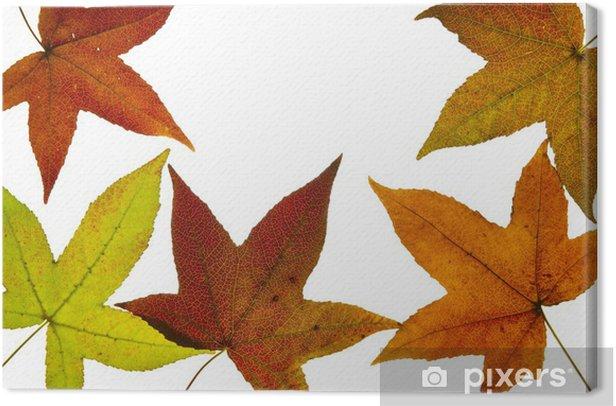 Tableau sur toile Liquide Ambre Arbre Feuilles d'automne rétroéclairé - Saisons