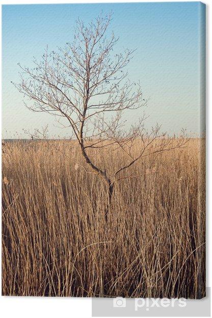 Tableau sur toile Lonely arbre sur des roseaux - Europe