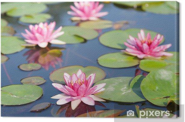 Tableau sur toile Lotus dans l'étang. - Fleurs