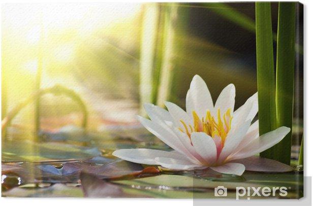 Tableau sur toile Lotus fleur - Fleurs
