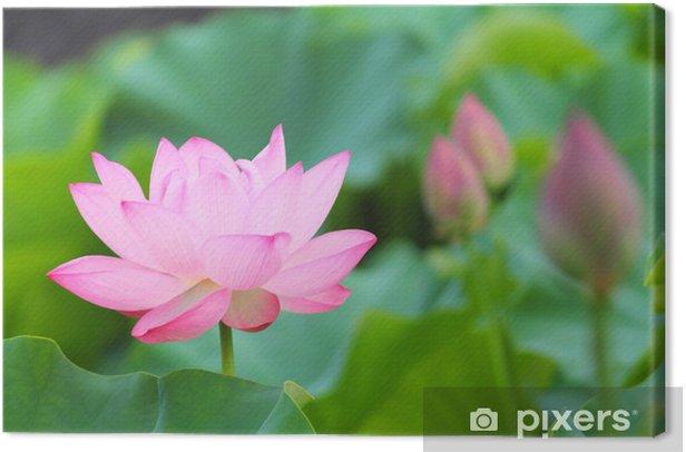 Tableau sur toile Lotus - Saisons